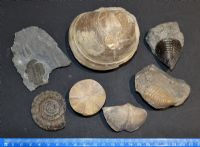 An interesting and great value group of 8 x large Fossils, Ex Old UK collection (Lot 1) SOLD